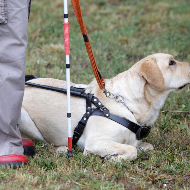 """""""Blind person with her guide dog"""" stock image"""