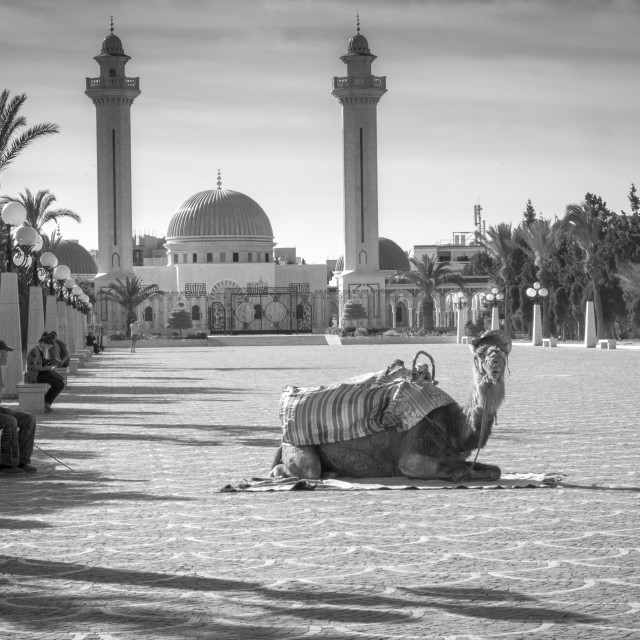 """Sousse Camel"" stock image"