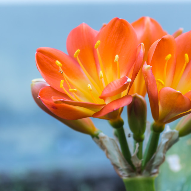 """""""The flower on the succulent"""" stock image"""