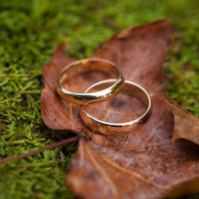"""Wedding Rings"" stock image"