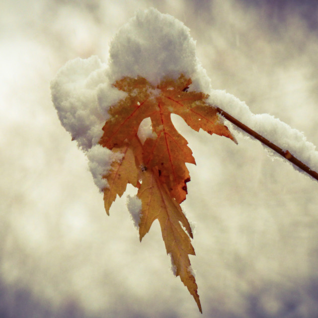 """""""Fall And Winter Collide"""" stock image"""
