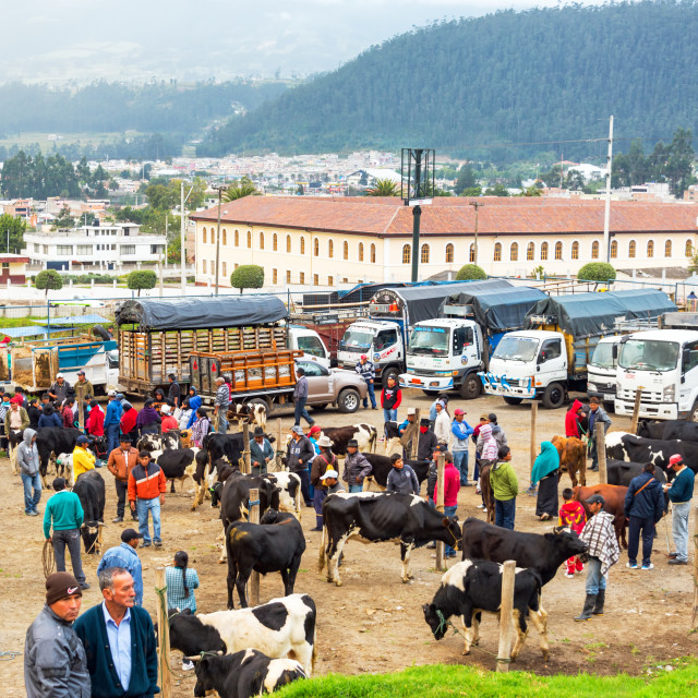"""Otavalo Animal Market"" stock image"