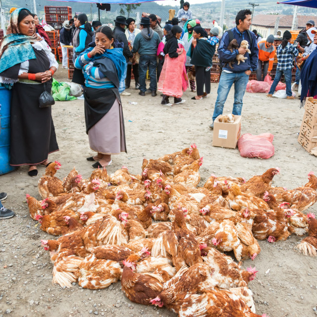"""Chickens at Market"" stock image"