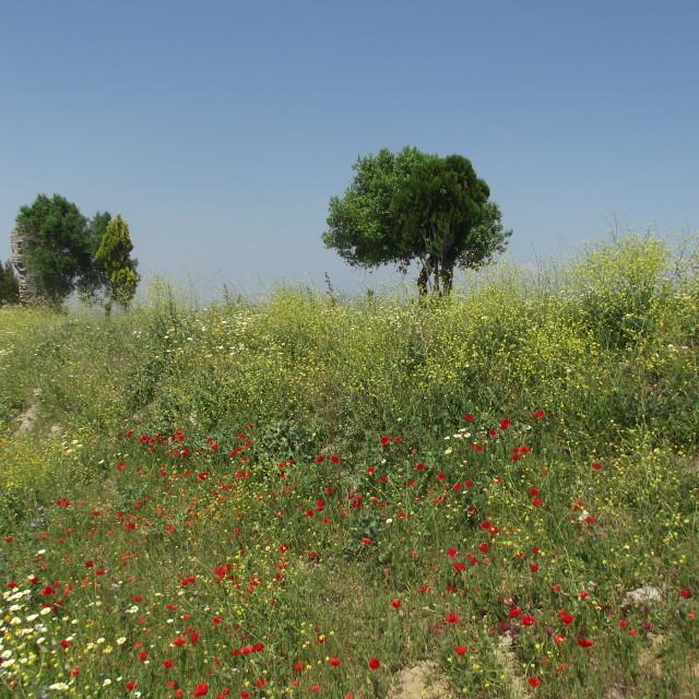 """Hilltop Meadow in Medina Sidonia, Cadiz, Spain"" stock image"