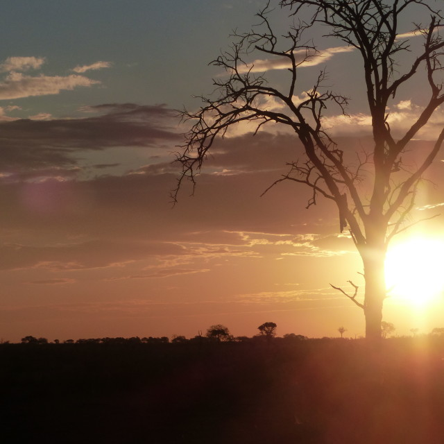 """""""Sun sets behind a tree"""" stock image"""