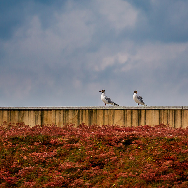 """Two seagulls on a rooftop"" stock image"