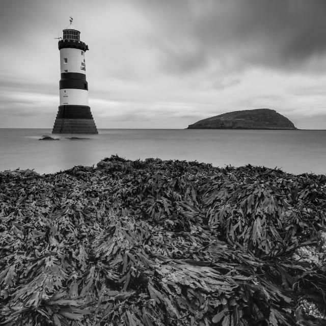 """Trwyn Du Lighthouse"" stock image"
