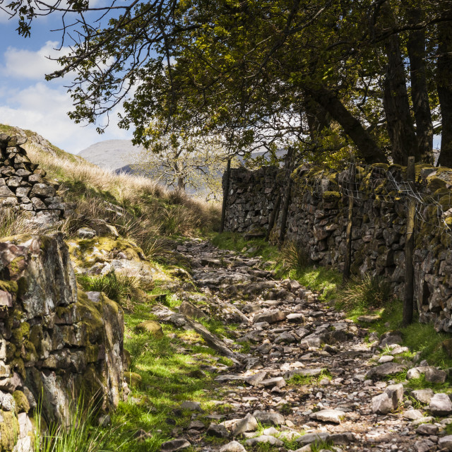 """Rocky path in the Lake District"" stock image"