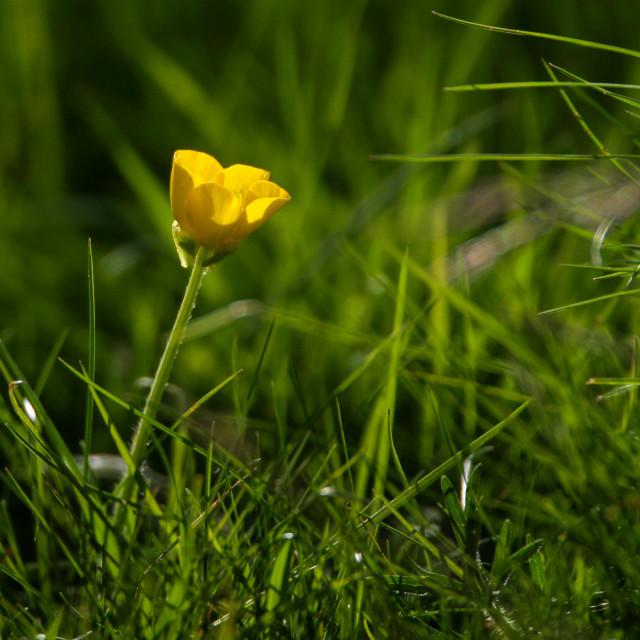 """Yellow Flower"" stock image"