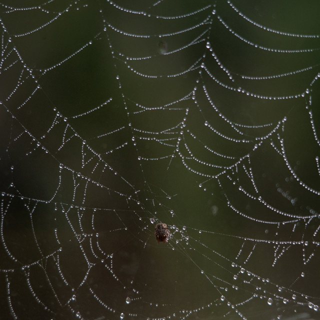 """Spider Web & Dew"" stock image"