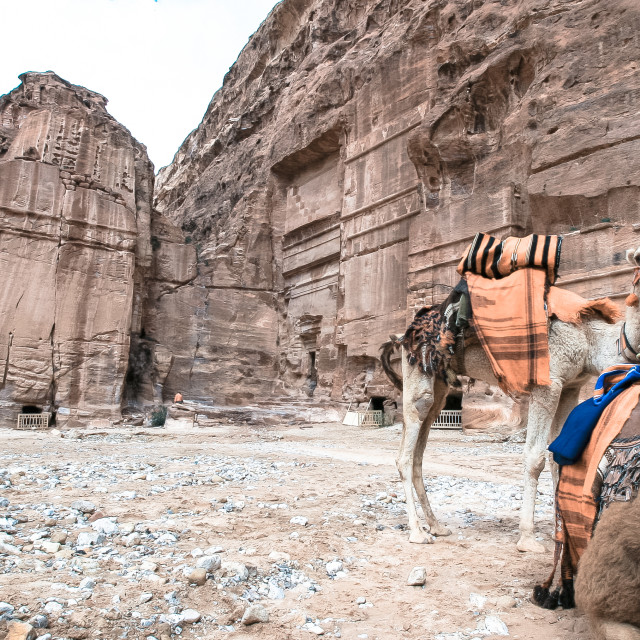 """The camels of Petra"" stock image"