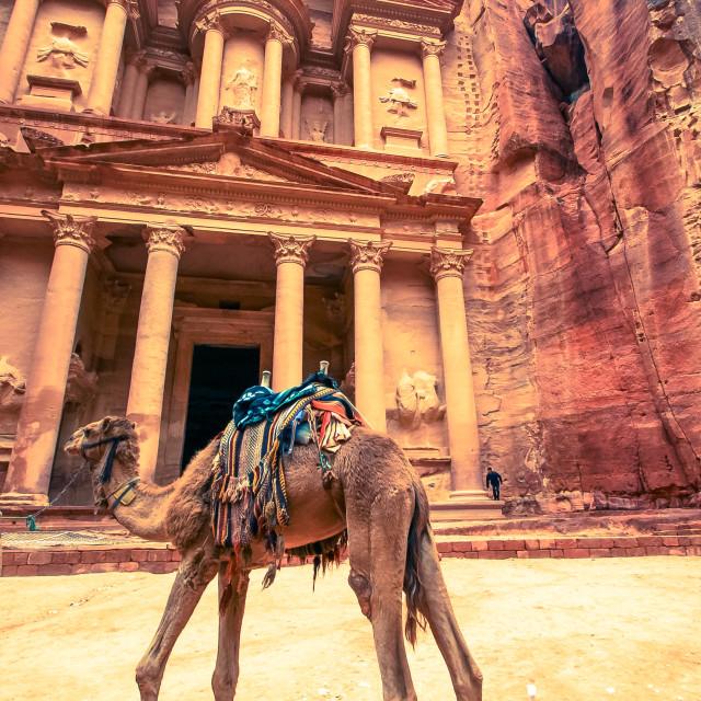 """""""Camel of Petra"""" stock image"""