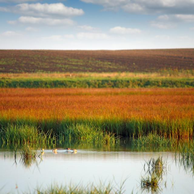 """swamp with birds landscape autumn season"" stock image"