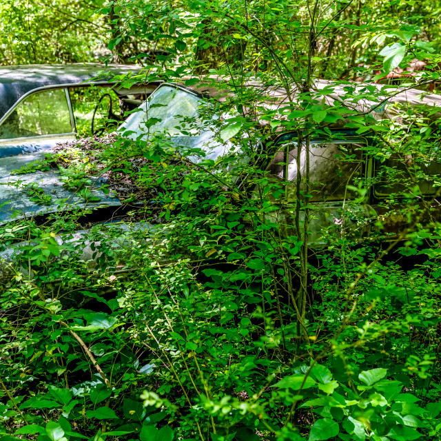 """Wrecked Volkswagon Fastback in Woods"" stock image"
