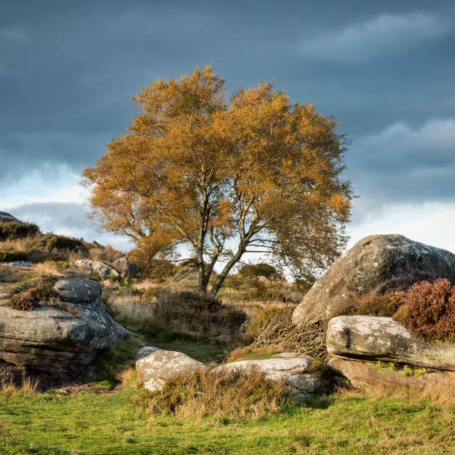 """Tree At Brimham Rocks"" stock image"