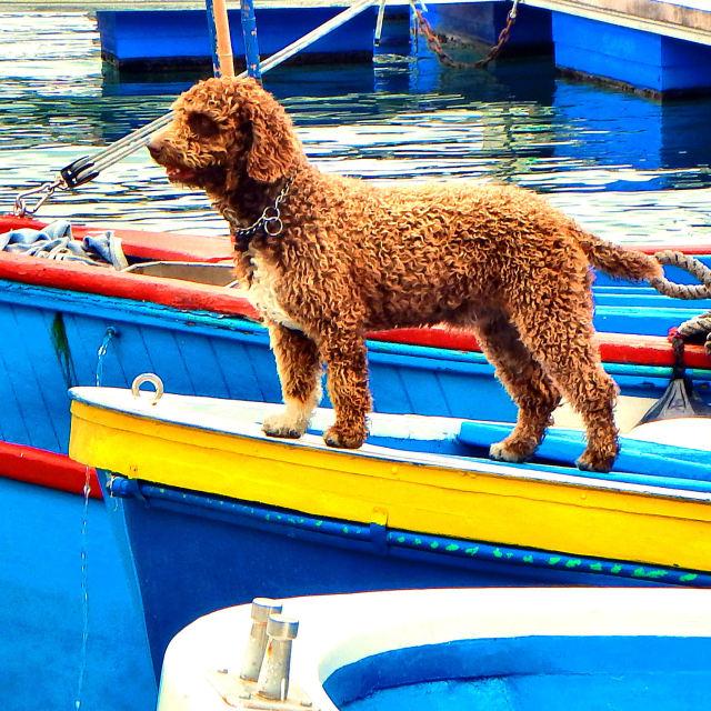 """""""Dog Fishing"""" stock image"""