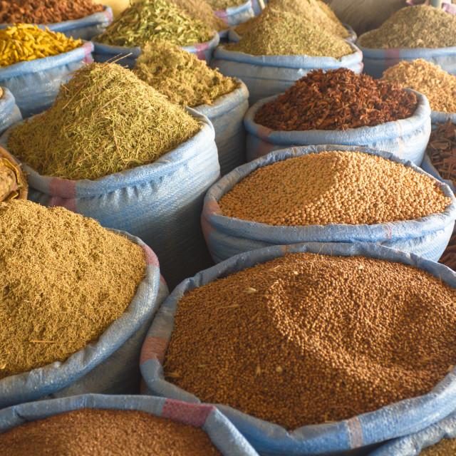 """Moroccan species"" stock image"