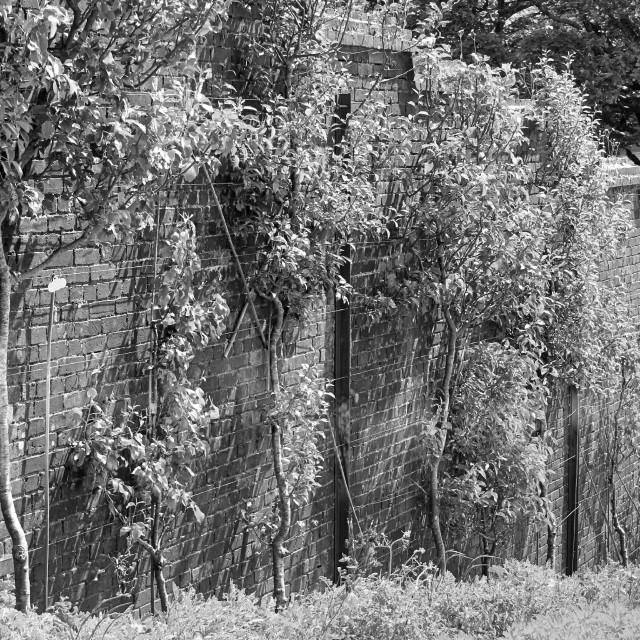 """""""Garden wall"""" stock image"""