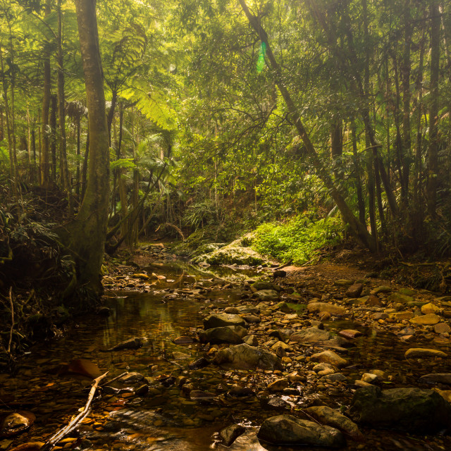 """""""Early Morning Mt Cougal National Park"""" stock image"""