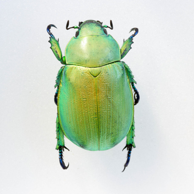 """Green Robot Bug"" stock image"