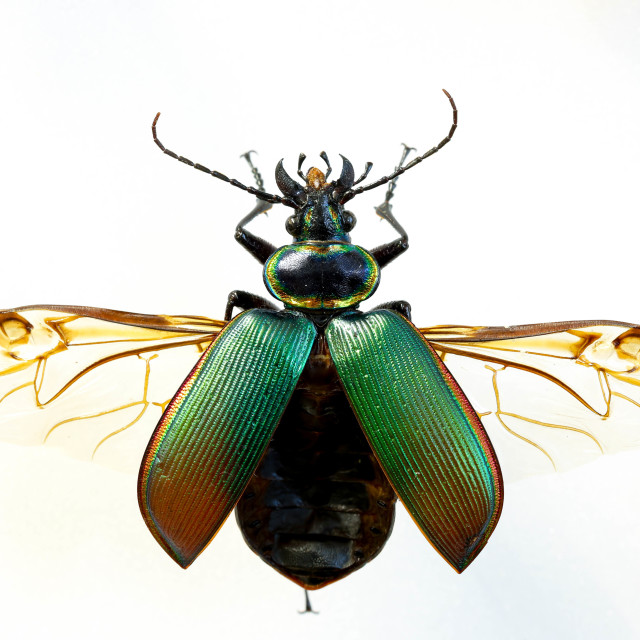 """Green Beatle"" stock image"