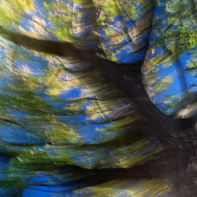 """Abstract Tree on Blue Sky"" stock image"