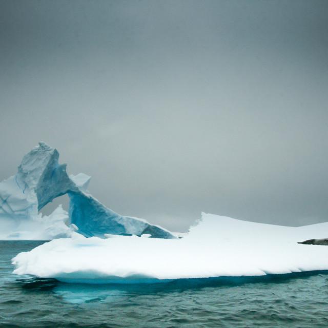"""A seal sleeping on an iceberg"" stock image"
