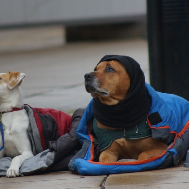 """Street Dogs"" stock image"