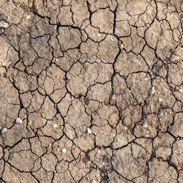 """""""Cracked soil"""" stock image"""