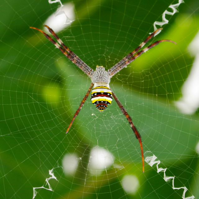 """""""Spider in his mesh"""" stock image"""