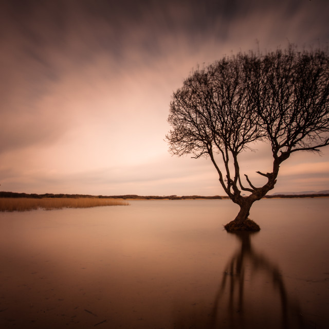 """The Kenfig Tree"" stock image"