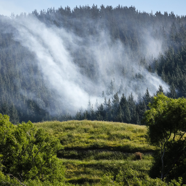 """""""forest fire"""" stock image"""