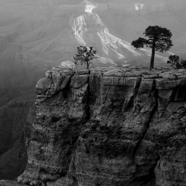 """""""Trees in the Canyon"""" stock image"""