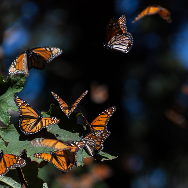 """Monarchs Landing"" stock image"