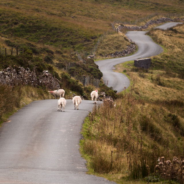 """""""Welsh mountain road"""" stock image"""