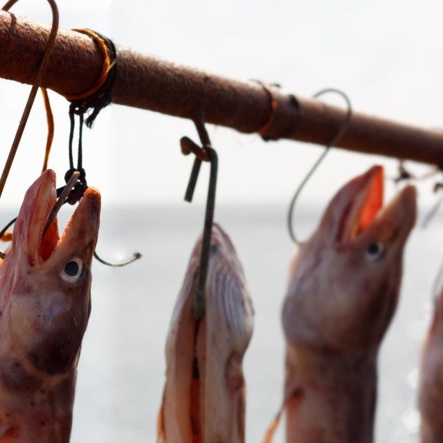 """Fish Hanging to Dry"" stock image"