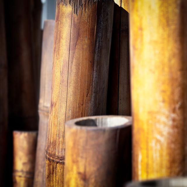 """Mature Bamboo."" stock image"