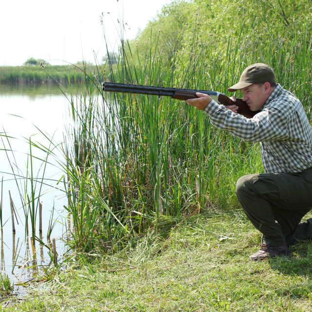 """hunter aiming and ready for shot wild duck hunting"" stock image"