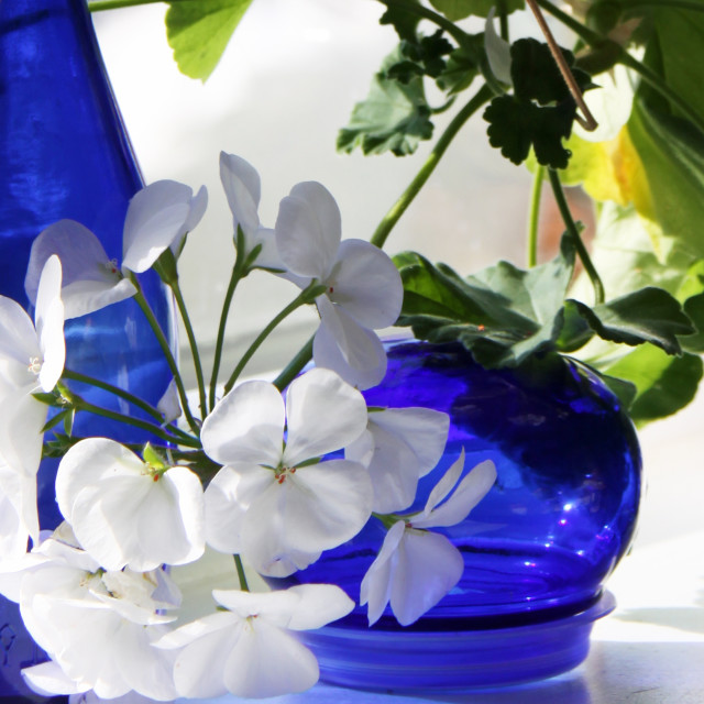"""""""White Petals and Blue Glass"""" stock image"""