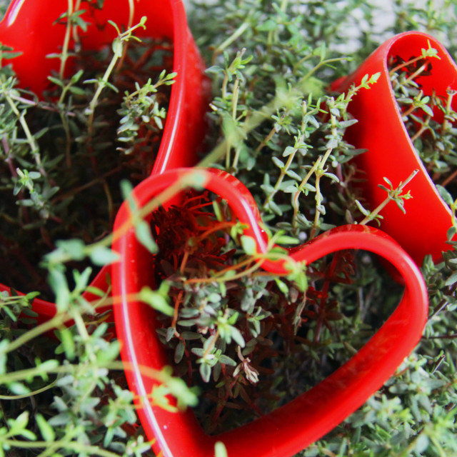 """""""Hearts and Thyme"""" stock image"""