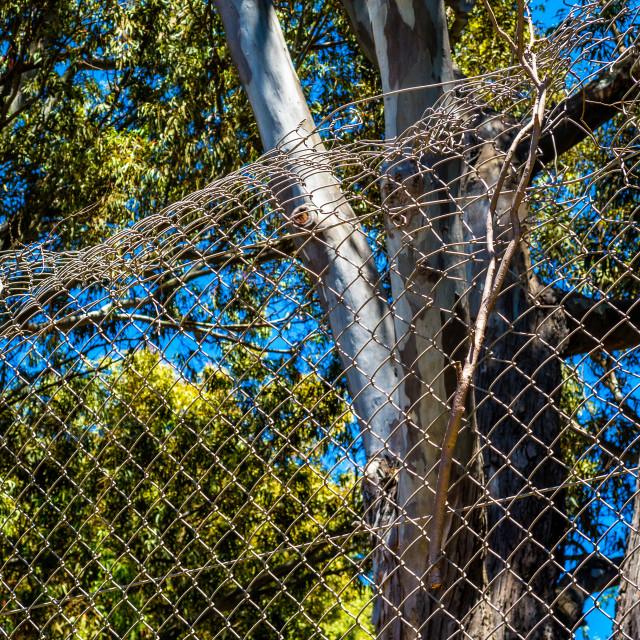 """Broken wire fence"" stock image"