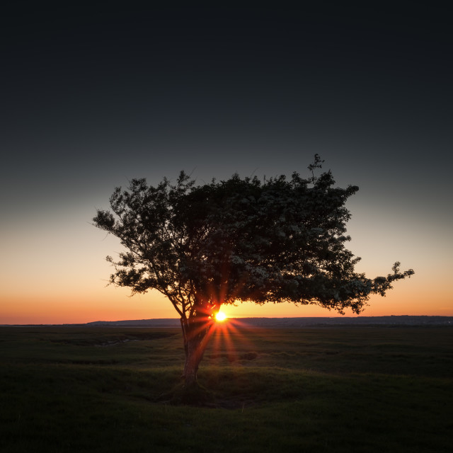 """Windswept tree at Penclawdd, Gower"" stock image"