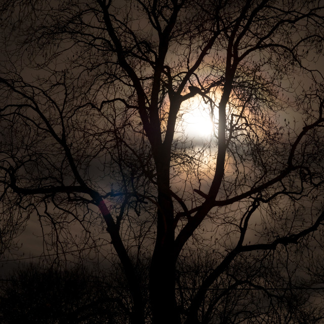 """Moon Tree 3"" stock image"