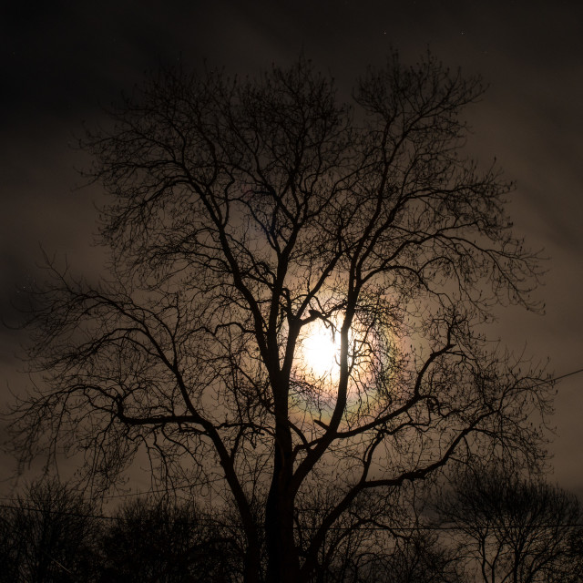 """Moon Tree 5"" stock image"