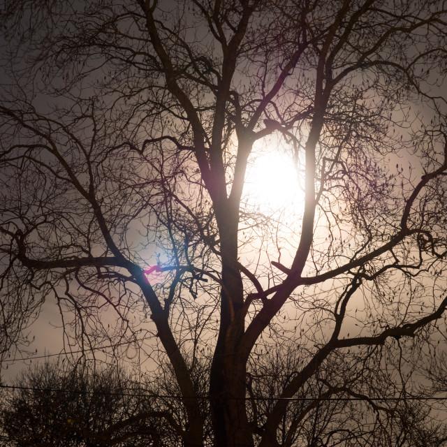 """Moon Tree 2"" stock image"