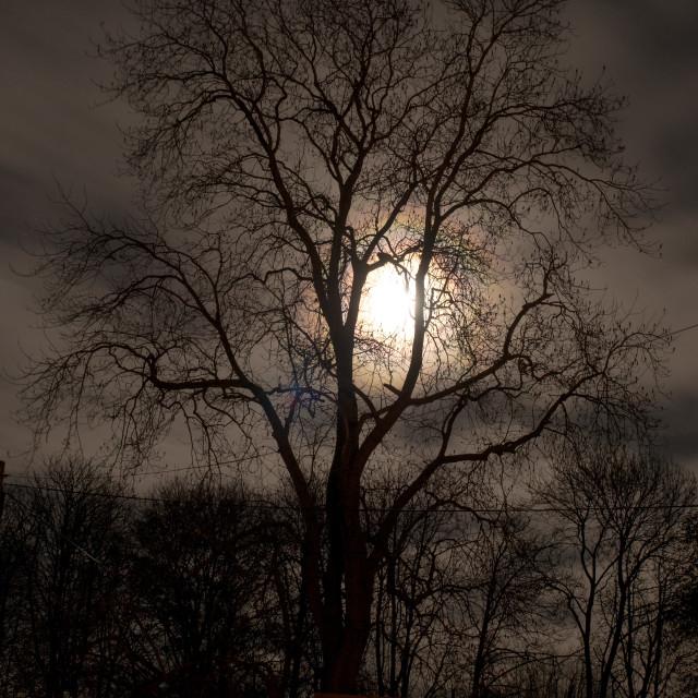 """Moon Tree 4"" stock image"