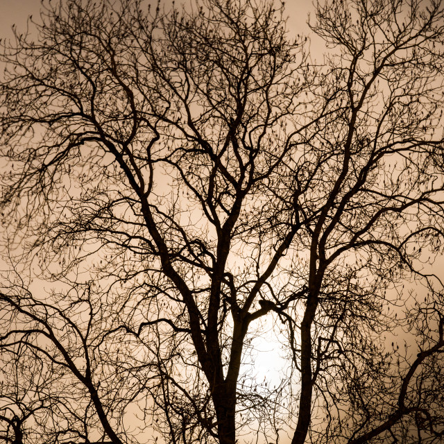 """Moon Tree 1"" stock image"