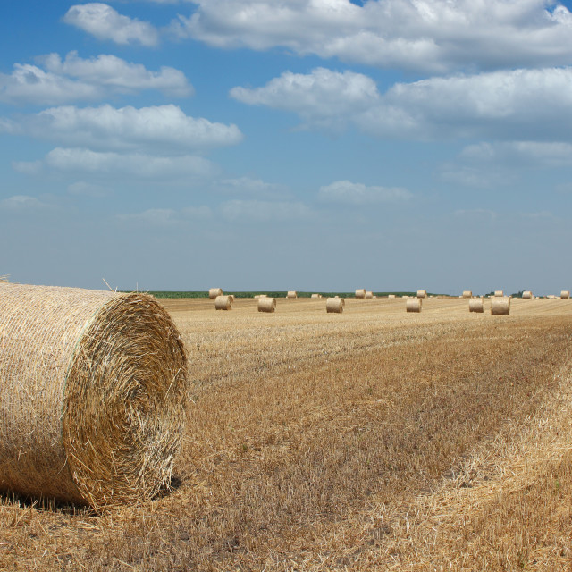 """field with straw bale agriculture industry"" stock image"