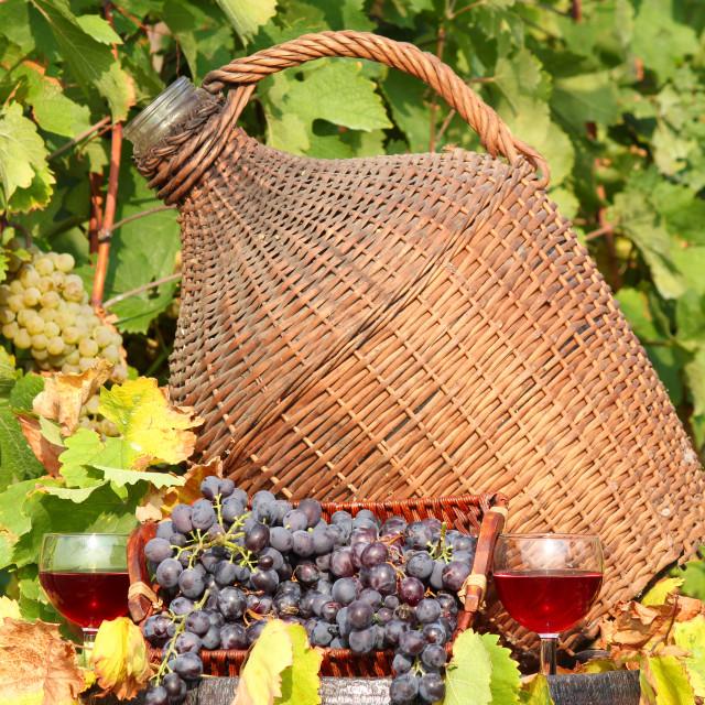 """red wine autumn scene"" stock image"