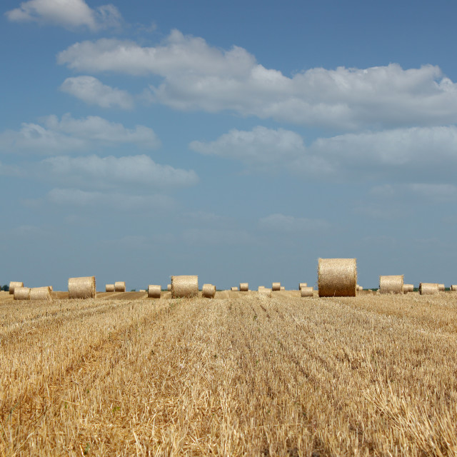 """agriculture field with straw bale"" stock image"
